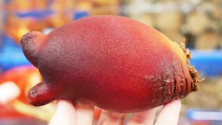 """长得酷似""""菠萝""""的海鲜,日本人直接生吃,太强悍了!"""