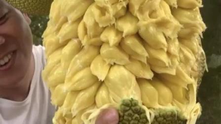 整个村子的菠萝蜜都熟了,香甜软糯,你想吃吗?