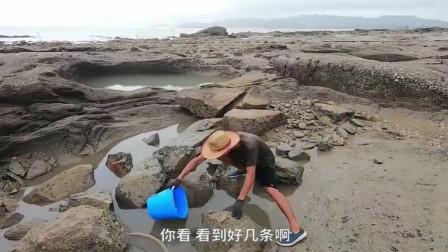赶海发现水坑好多人,抽干水在去抓真爽