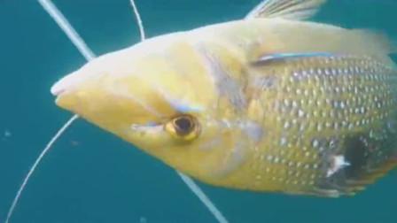 赶海潜水抓鱼,这种方法抓鱼就是厉害