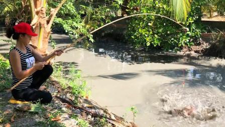 河沟里的黑鱼饿疯了,妹子抛几竿,杆杆上钩,看看她钓了多少?
