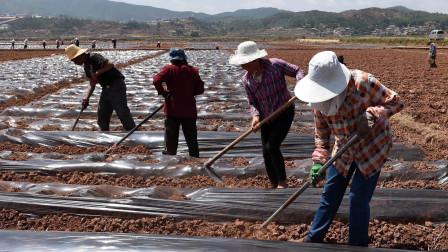 """农村土地迎来""""2大选择"""",农民应该如何选择?专家最新回应!"""