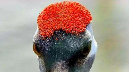 """鹤顶红被称为毒药之王,跟""""丹顶鹤""""有关系吗?看完终于懂了!"""