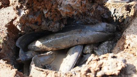 小男孩来到干裂的旱地,掰开泥土发现里面全是鱼,镜头拍下全过程
