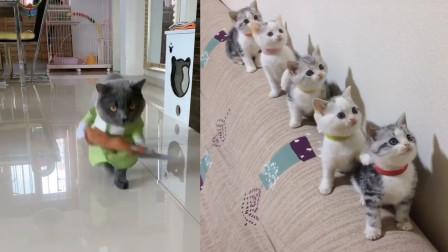 猫咪粘主人,却不料被主人捉弄,猫咪:你不配我的温柔!