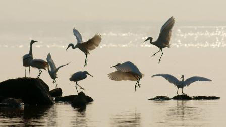 迁徙的鸟:候鸟迁徙真的只为御寒吗,自然与人文的关系值得思考