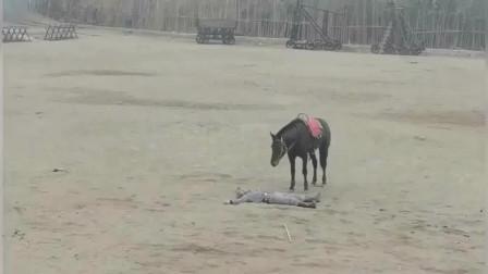 这匹马是跟谁学的演戏,演技我咋看着比人演的都要好.
