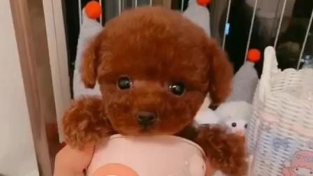 纯种泰迪犬 泰迪犬多少钱一只 泰迪犬价格 泰迪犬喜欢吃什么东西