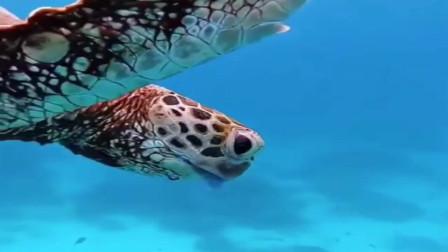 纽约潜水员在海底拍摄这一幕,一只正在捕食水母的海龟,不要太狠毒