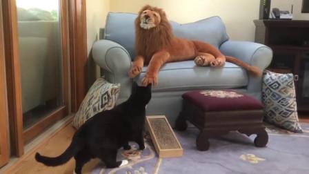 宠物不是人,但主人是真的狗,调戏宠物集绵