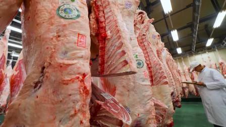 带你进入日本的神户牛肉工厂