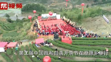 全县四分之一是茶园?第二届中国政和白茶开茶节在这里开幕了