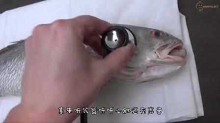 养的锦鲤不吃不喝肚子反而越来越大用手挤出了东西