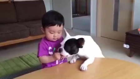 狗子:别以为就你会哭,我也会