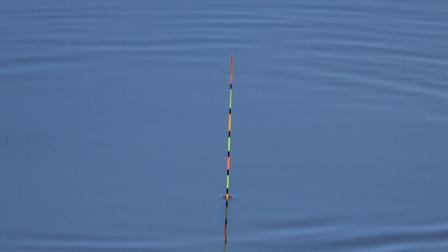 钓鱼:越钓鱼口越慢了,估计这群鱼快被钓没了!