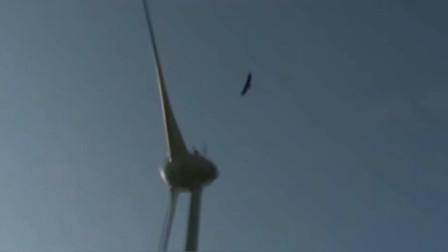 最倒霉的鹰,被风力涡轮击落,太无辜了!