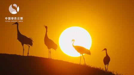 候鸟迁徙,一场生命的旅程