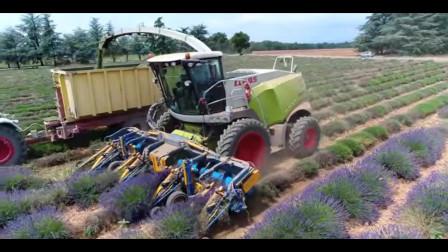 薰衣草收获&精油蒸馏|法国普罗旺斯的瓦伦索