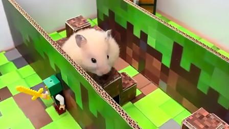 小伙将仓鼠放进我的世界迷宫,本以为无法穿出,下一刻被实力打脸