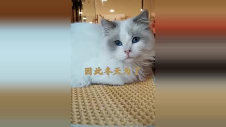 猫咪揣手手的秘密你知道吗难道只是为了保暖吗可不是这么简单