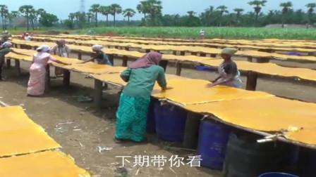 印度小吃:芒果干的制作过程.看完你还敢吃吗?