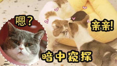10只猫和8只狗养一起是什么样的体验?猫狗双全人士的最全喂养指南!