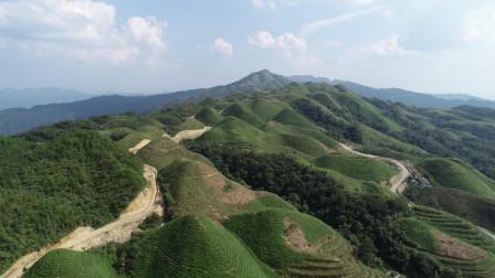 贵州省黔南州三都水族自治县都江镇铜马山有机茶厂部分实景