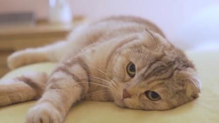 """原来猫咪也是会道歉的?喵星人的5个行为,告诉你""""朕很抱歉"""""""