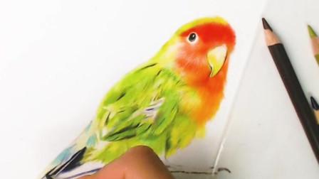 画只鹦鹉有人喜欢吗,素描视频彩铅怎么画,美术艺考,素描彩铅手绘视频,素描怎么画,祖庙教学,艺考美术考什么