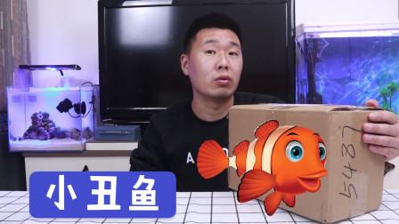 小丑鱼开箱:买了2条超萌的海洋动物,这也太可爱了吧