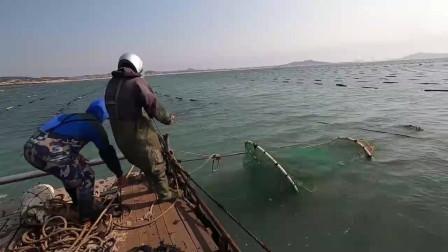 农村莆田小伙赶海,抓获20斤大鲈鱼和黄花鱼,卖了5000多元发财了