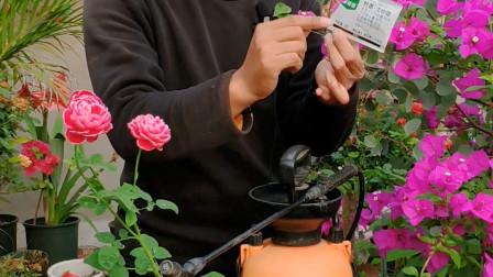 家庭种植花卉,使用药物的几个小技巧,都是自己平时种花总结出来的经验
