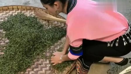 西双版纳佤族采茶妹,给大家演示云南茶叶的制作过程