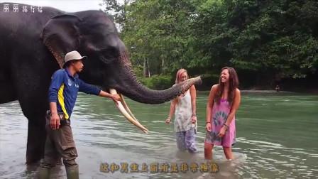 日本厕门上画大象和长颈鹿标志,哪个是男厕网友太考验智商啊