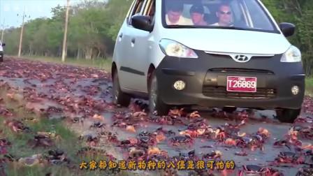 一种在中国混不下去的动物,跑到俄罗斯,立马就泛滥成灾了啊