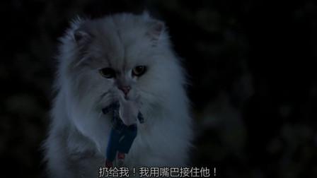 精灵鼠小弟:小白和野猫是一伙的!合伙抓鼠小弟,还好它良心发现