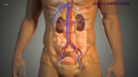 医学3D演示:人体内各个结构和功能活动