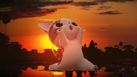 甜甜私房猫:小奇不简单,柔软的身体,体态非常优美