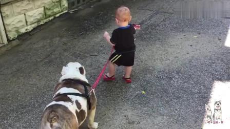 一岁宝宝牵狗绳要遛狗,狗子的反应被赞太懂事