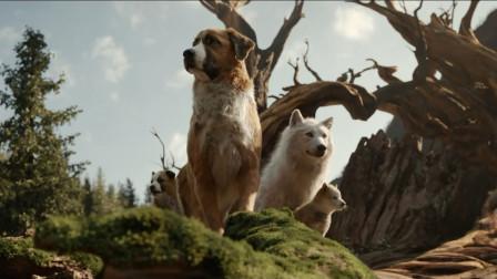 原始森林里的宠物狗,当上了狼王,灰熊都让它三分!