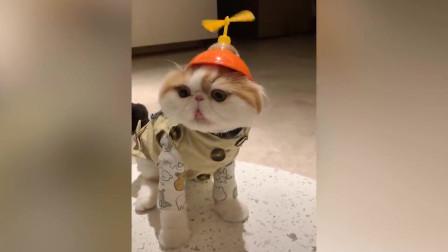 搞笑动物集锦(三)猫对玩具的反应