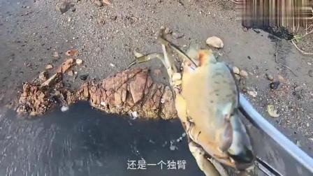赶海时发现的一个泥洞,伸手进去一掏果然有大家伙