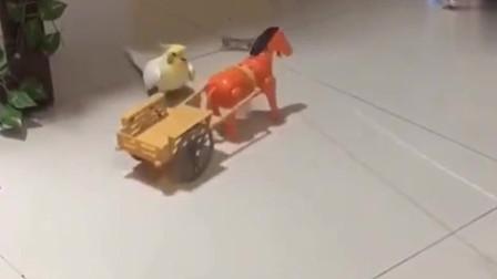 差点出车祸,吓得鹦鹉都骂街了!