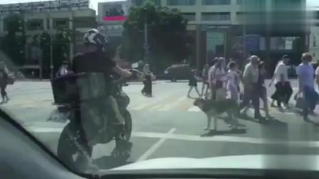 狗狗:我饿了,骑手:来一脚!