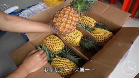 收到两箱来自海南的惊喜,金钻凤梨不泡盐水,连果心都可以直接吃