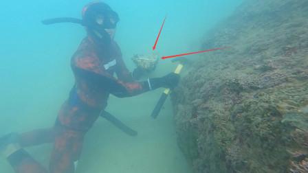 潜水发现比拳头还大的生蚝,上岸就给朋友送过去,有钱也买不到