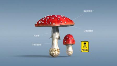 科普3D动画食用蘑菇和有毒蘑菇的区别 及它们的体形外观是如何的