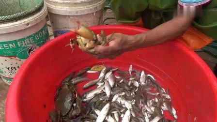赶海小哥抓螃蟹日,5只比手大的螃蟹舍不得卖,一家人吃爽了