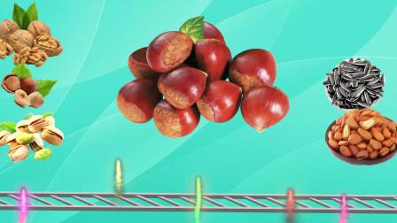 认识榛子等6大美味坚果,乐宝识果蔬