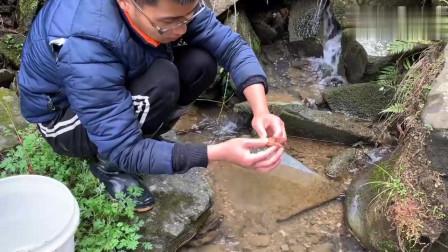 3A级水质小水沟抓蟹,蟹小如果拿来炒一口一个更香更脆更能入口